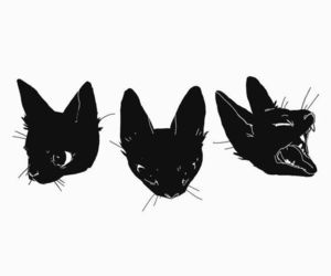 black, black and white, and cats image