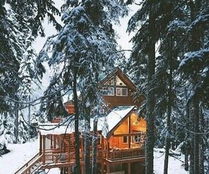 forest, goals, and christmas image