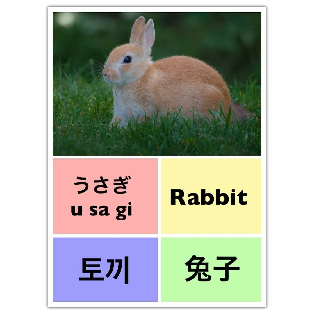 rabbit, learn english, and learn chinese image