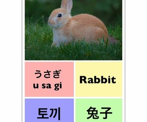 rabbit, learn chinese, and learn english image