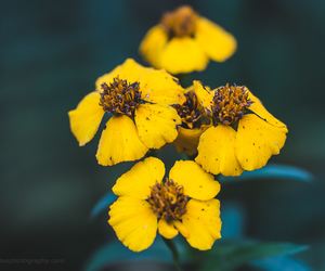 flowers, lensbaby, and nature image