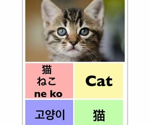 cat, 고양이, and learn chinese image