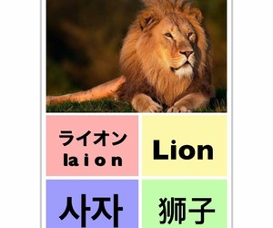 lion, learn chinese, and learn english image