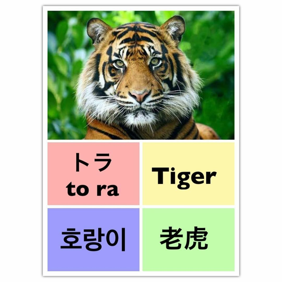 tiger, learn english, and learn chinese image