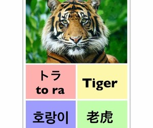tiger, learn chinese, and learn english image