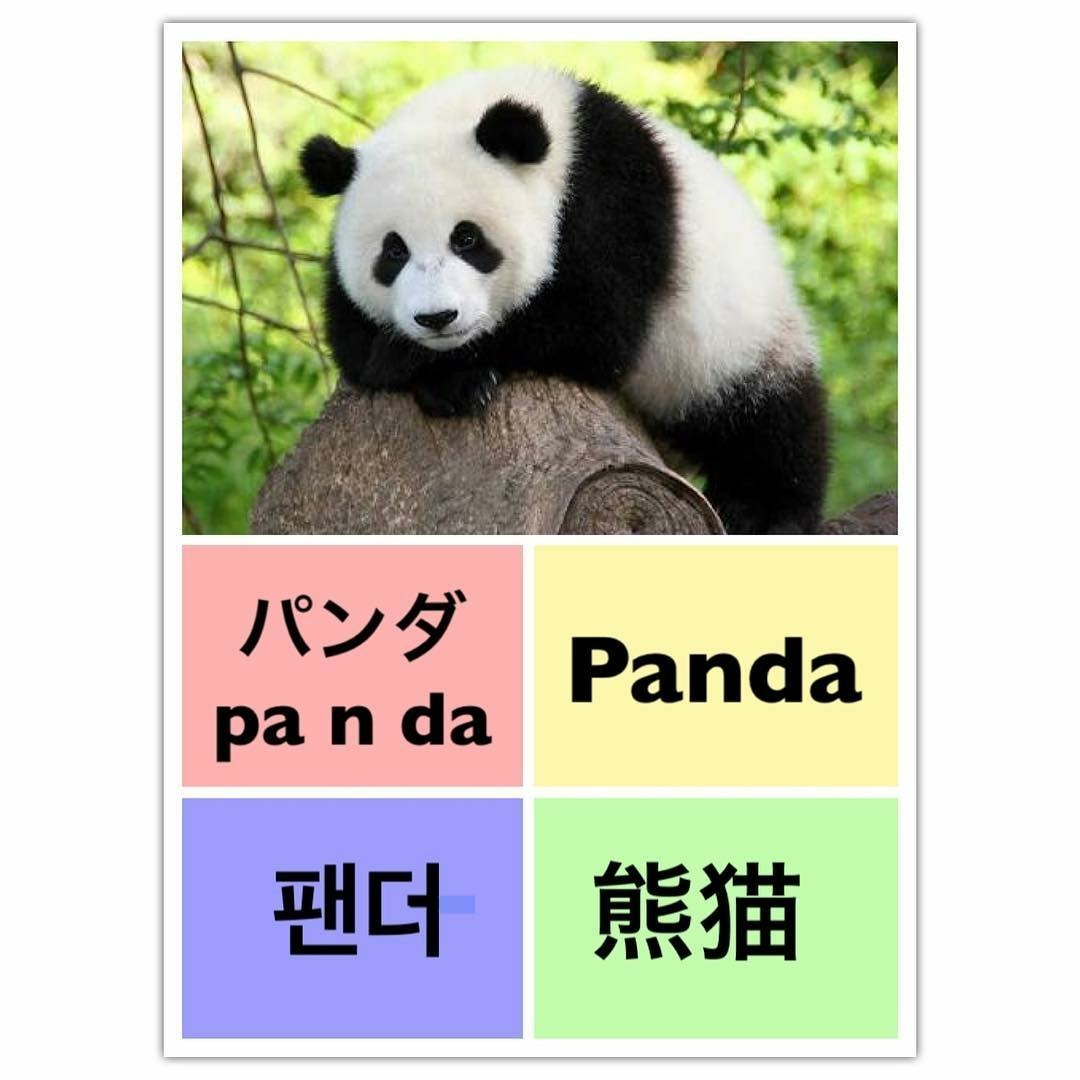 learn english, panda, and learn chinese image