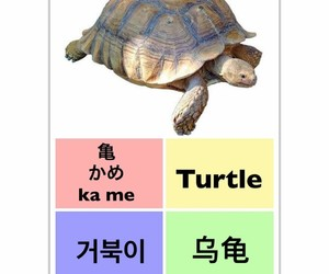 turtle, learn chinese, and learn english image