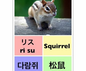 squirrel, learn chinese, and learn english image
