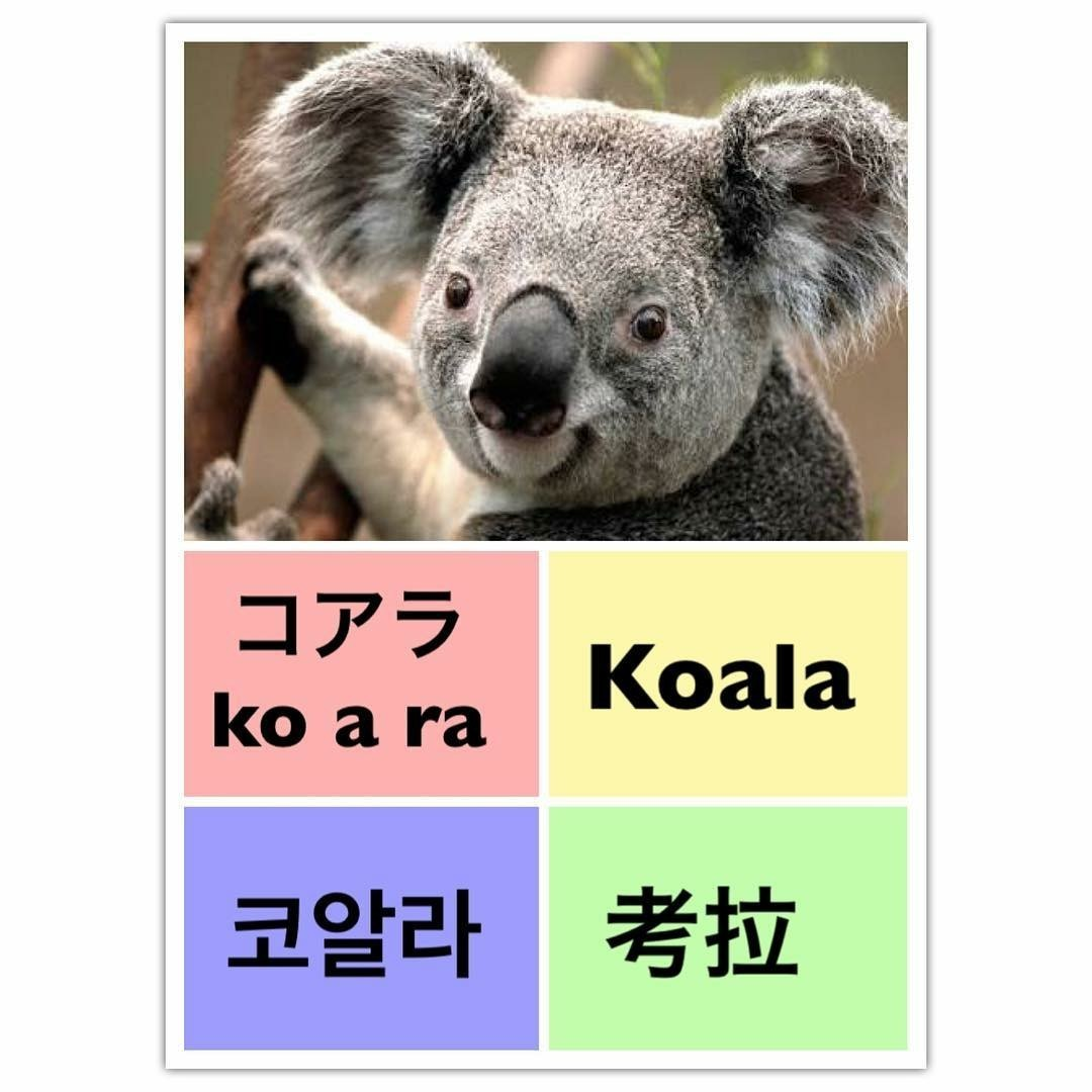 Koala, learn english, and learn chinese image