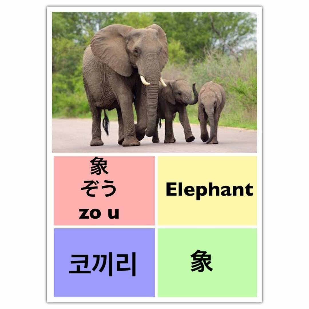 learn chinese, Éléphant, and learn english image