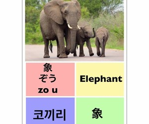 learn chinese, learn english, and Éléphant image