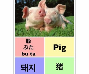 pig, learn chinese, and learn english image