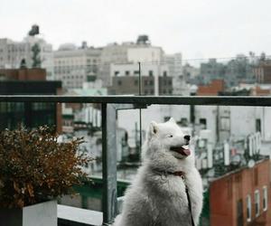 Animales, beautiful, and dog image