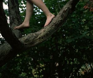 nature, tree, and feet image