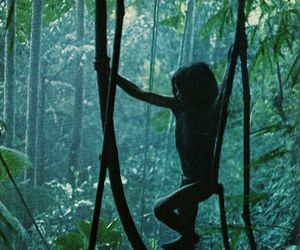 forest, child, and tarzan image