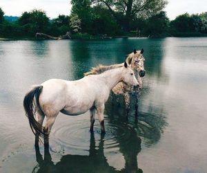 animal, horse, and beautiful image