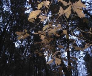 arbres image