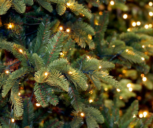 christmas, christmas tree, and christmas lights image