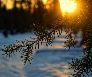 light, nature, and photo image