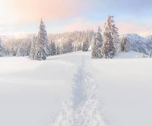 forest, snowy, and white image