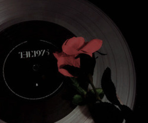 the 1975, aesthetic, and rose image