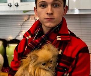 tom holland, spiderman, and dog image