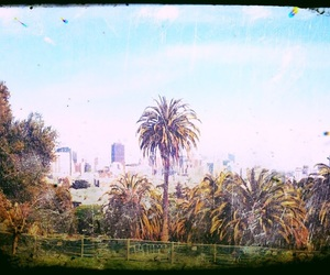 california, photography, and palm trees image
