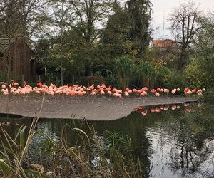 flamingos, pink, and prague zoo image