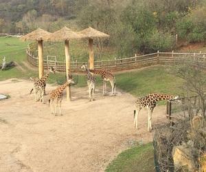animal, longneck, and giraff image