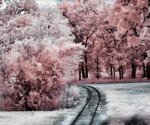 landscape, rime, and snow image