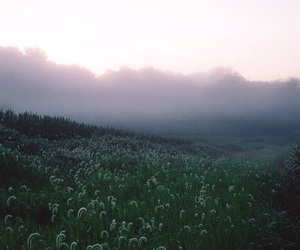 field, fog, and freedom image
