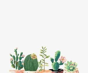 cactus, wallpaper, and flowers image
