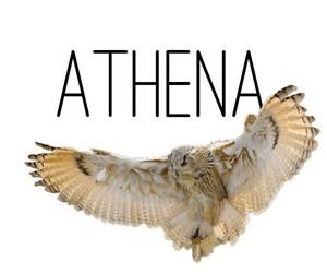 athena, godess, and greek image