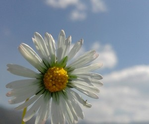 flower, life, and sky image