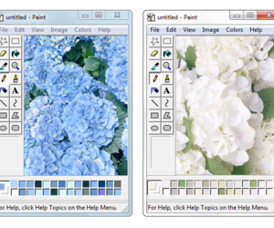 flowers, edit, and png image
