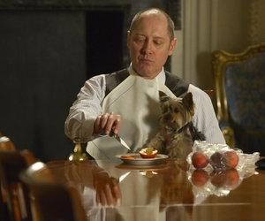 puppy, reddington, and blacklist image