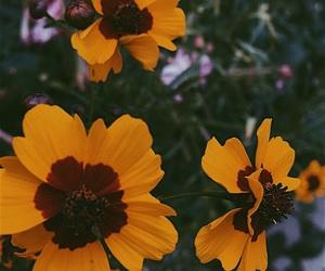 daisy, farm, and flowers image