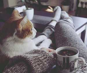 cat, cozy, and home image