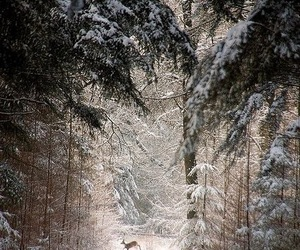 forest, winter, and deer image