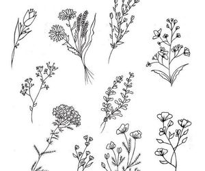 black and white, draw, and flowers image