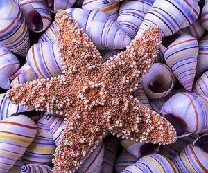 sea, ocean, and purple image