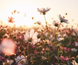 background, nature, and spring image