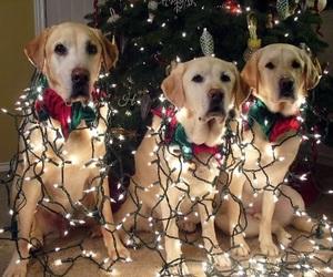 christmas, dogs, and light image