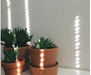 plants, tumblr, and cactus image