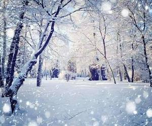 beauty, cold, and snow image