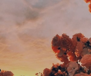 flowers, wallpaper, and sunset image