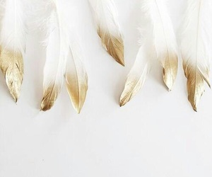 feathers, gold, and white image