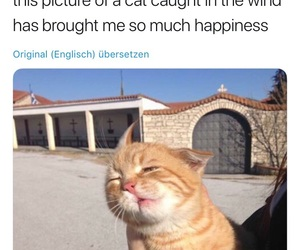 cat, funny, and happiness image