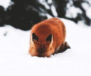 winter, animal, and cold image