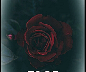 black, happy, and roses image